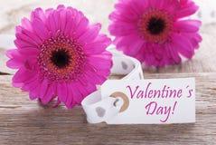Gerbera rose de ressort, label, jour de valentines des textes Images stock