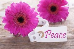 Gerbera rose de ressort, label, paix des textes Image libre de droits