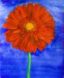 Gerbera rouge Photo libre de droits