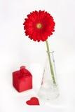 Gerbera rouge avec le cadeau photos stock