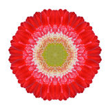 Gerbera rouge Mandala Flower Kaleidoscopic Isolated sur le blanc Photographie stock
