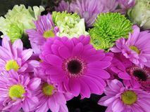 Gerbera roxo consideravelmente brilhante & atrativo Daisy Flower Bouquet fotografia de stock