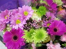 Gerbera roxo consideravelmente brilhante & atrativo Daisy Flower Bouquet foto de stock