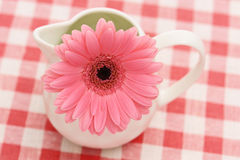 Gerbera in sauceboat Royalty Free Stock Photography