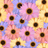 Gerbera Seamless Pattern Floral Background Stock Images