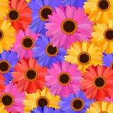 Gerbera Seamless Pattern Floral Background Stock Photo