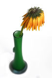 Gerbera sec dans le vase image stock