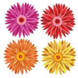 Gerbera - sistema de diversas flores de los colores del vector Stock de ilustración