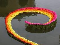 Gerbera sur l'eau Image libre de droits