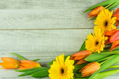 Gerbera and tulips in orange. On a wooden background royalty free stock photography