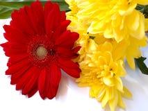 Gerbera- und Chrysanthemenblumen! stockfoto
