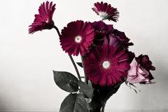Gerbera und Rose Lizenzfreies Stockfoto