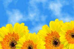 Gerbera under summer sky Royalty Free Stock Image
