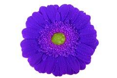 Gerbera, valentijnskaarten, bloem Royalty-vrije Stock Afbeeldingen