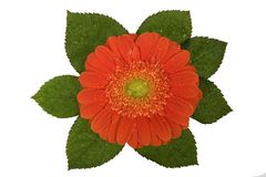 Gerbera, Valentinsgrüße, Blume Lizenzfreies Stockbild