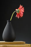 Gerbera in vase Stock Photography