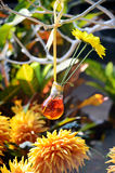Gerbera in a Vase Royalty Free Stock Photo
