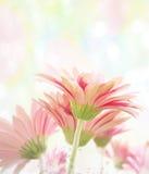 Gerbera Watercolor. Digital Painting Of  Gerbera Flowers Stock Photography