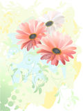 Gerbera watercolor drawing Stock Photography