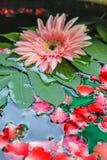 Gerbera y Rose Petals rosados en lavabo Foto de archivo libre de regalías