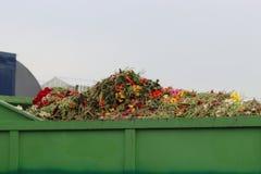 Gerberablomma som organisk avfalls i behållare på en växthusbarnkammare i Moerkapelle, Nederländerna royaltyfri bild