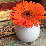 Gerberablume in einem weißen Vase auf der hölzernen Tabelle Lizenzfreie Stockbilder