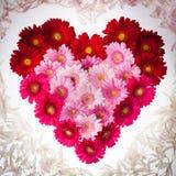 Gerberablumenherz mit den Blumenblättern Lizenzfreies Stockbild
