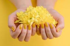 Gerberaen blommar i kupade händer fotografering för bildbyråer