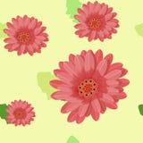 Gerberaen blommar sömlöst på ett ljus också vektor för coreldrawillustration Arkivfoton