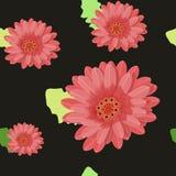 Gerberaen blommar sömlöst på ett mörker också vektor för coreldrawillustration Royaltyfria Foton