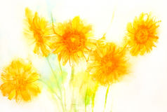 Gerberagänseblümchen. Papier. Aquarell. Stockbild