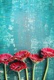 Gerberagänseblümchenblumen-Grußkartenkonzept Blumengrenze auf Weinleseknickentenhintergrund Beschneidungspfad eingeschlossen Gruß Lizenzfreies Stockbild