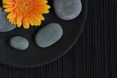 Gerberagänseblümchen und -kiesel Lizenzfreie Stockbilder
