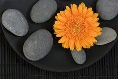 Gerberagänseblümchen und -kiesel Lizenzfreie Stockfotografie