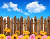 Gerberas Imagem de Stock Royalty Free