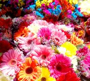 The gerberas royalty free stock image