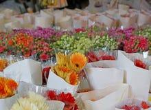 Gerberas bonitos Foto de Stock