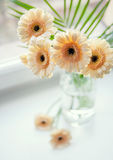 Gerberas bouquet on the windowsill with bright daylight Royalty Free Stock Photos