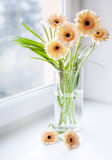 Gerberas bouquet on the windowsill with bright daylight Stock Images