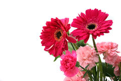 Gerberas & carnations Royalty Free Stock Photos
