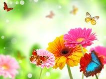 Gerberas com borboletas Fotos de Stock Royalty Free