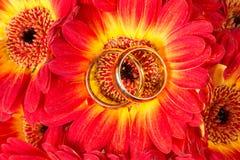 Gerberas com dois anéis dourados Fotografia de Stock Royalty Free