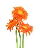 Gerberas de bouquet Photo libre de droits