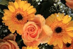 Gerberas e rose Fotografia Stock Libera da Diritti