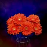 Gerberas en florero Foto de archivo libre de regalías