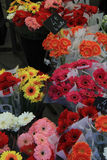 Gerberas at a flower market Stock Photo