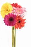 Gerberas im Vase Lizenzfreie Stockbilder