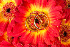 Gerberas met twee gouden ringen Royalty-vrije Stock Fotografie