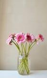 Gerberas rosados Foto de archivo