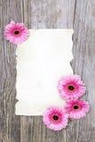 Gerberas rosados y hoja vacía Foto de archivo